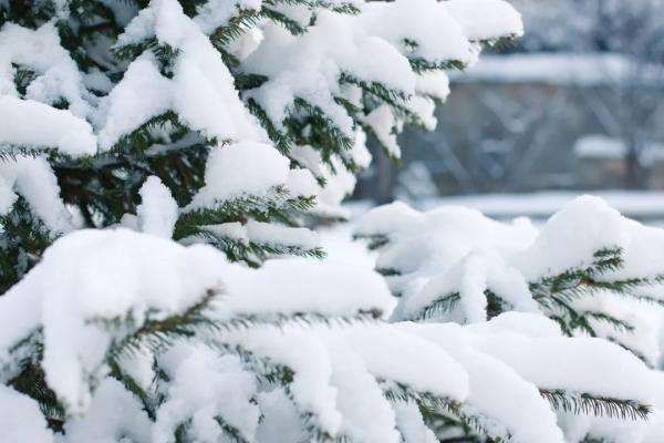 冬季机械养护