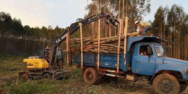 宝鼎抓木机桉树装车作业