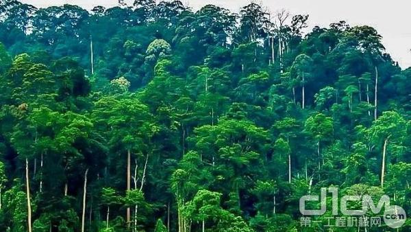 马来西亚热带雨林