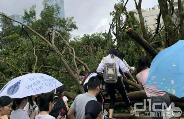 """台风""""山竹""""受灾现场"""