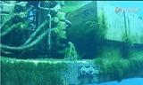 卡特彼勒海底作业挖掘机