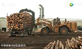 国外机械化贮木场,生意红红火火,照这速度万亩森林要消失啊!