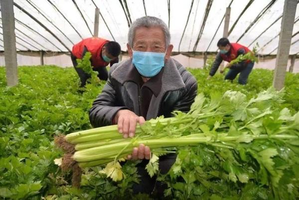 蔬菜基地采摘的新鲜蔬菜