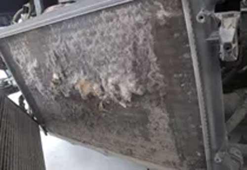 定期保养水箱散热器