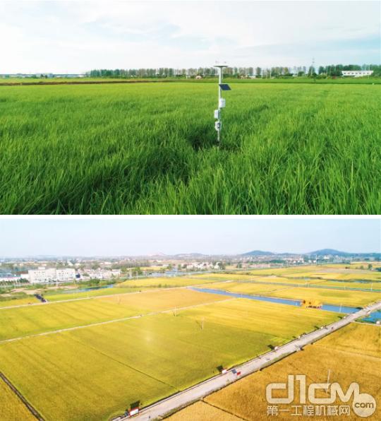 中联峨桥智慧农业示范基地(资料图)
